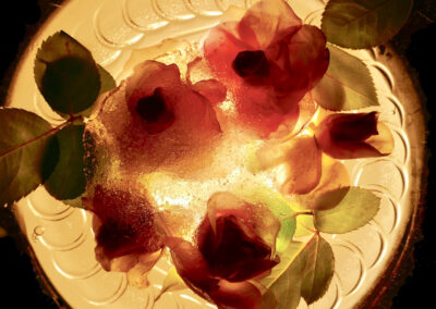 H.P. Götze: gefrorene Rosen